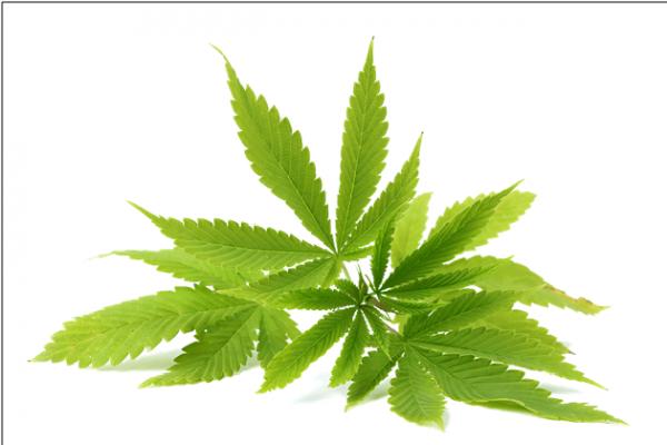 Cannabinoids In Cannabis