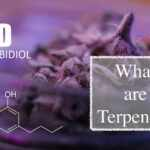 9 Impressive Benefits of Terpenes You Need to Know