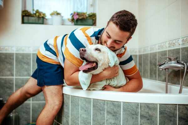 Bathe Dog at Home